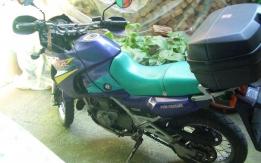 Kawasaki KLE 500 - 1998
